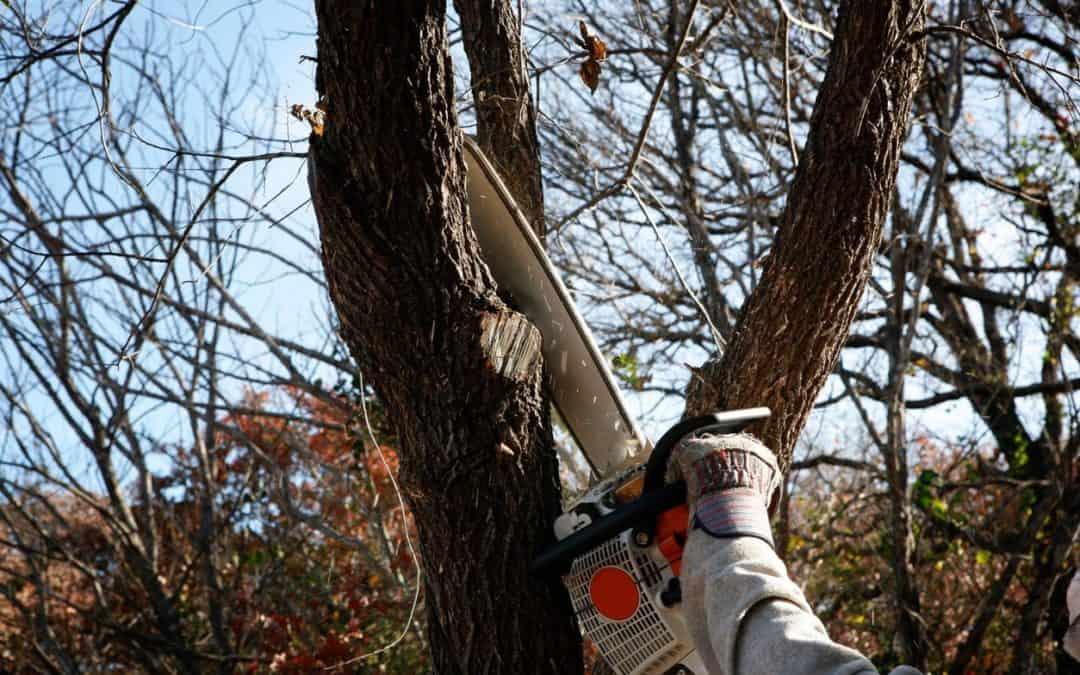 Arborist Tree Trimming / Removal Service